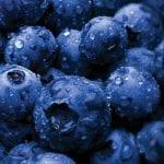 Wild Alaskan Blueberry